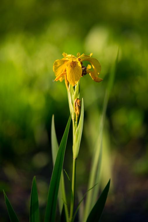 Zdjęcie kwiata - bokeh z Canona 100/2