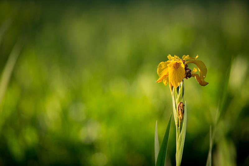 Zdjęcie kwiata - bokeh z Sigmy 20/1.4